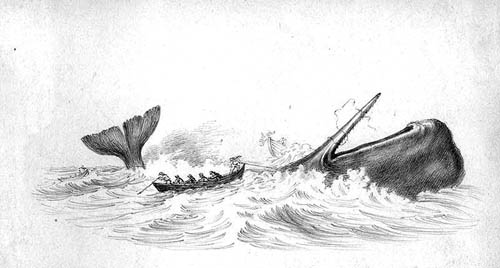 Hunting_of_sperm_whale